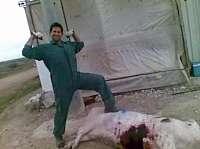 Toca Come. Brutalidad en un matadero de cerdos en Murcia. Marisol Collazos Soto