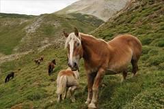 Toca Comer. Fraude carne de caballo. Marisol Collazos Soto, Rafael Barzanallana