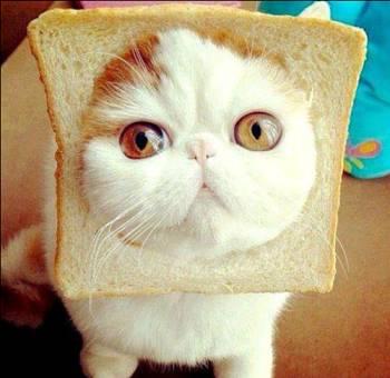 Toca Comer. Cabeza de gato en una rebanada de pan. Marisol Collazos Soto, Rafael Barzanallana