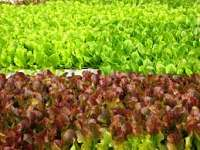 Toca Comer. El peligro de las verduras y frutas contaminadas. Marisol Collazos Soto, Rafael Barzanallana