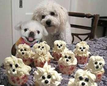 Toca Comer. Magdalenas con figura de perros. Marisol Collazos Soto