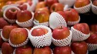 Toca Comer. Una nariz electrónica distingue peras de manzanas. Marisol Collazos Soto, Rafael Barzanallana