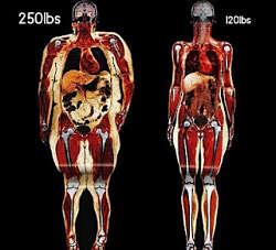 Toca Comer. Nuevo sitio web sobre salud, nutrición y población  . Marisol Collazos Soto, Rafael Barzanallana