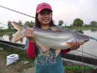 Toca Comer.   Panga: un pescado muy polémico. Marisol Collazos Soto, Rafael Barzanallana