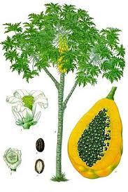 Toca Comer. Jugo gourmet de fruta exótica Carica. Marisol Collazos Soto, Rafael Barzanallana