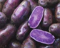 Toca Comer. Patata morada, efecto antihipertensivo. Marisol Collazos Soto