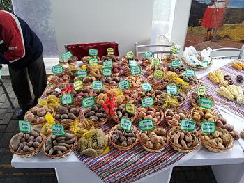 Toca Comer. Día Internacional de Diversidad Biológica . Marisol Collazos Soto, Rafael Barzanallana