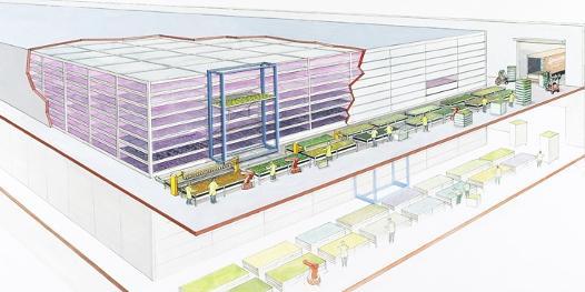 Toca Comer. Cultivo de plantas en edificios y con luz LED. Marisol Collazos Soto