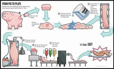 Toca Comer.  Elaboración de salchichas, del cerdo al plato. Marisol Collazos Soto, Rafael Barzanallana