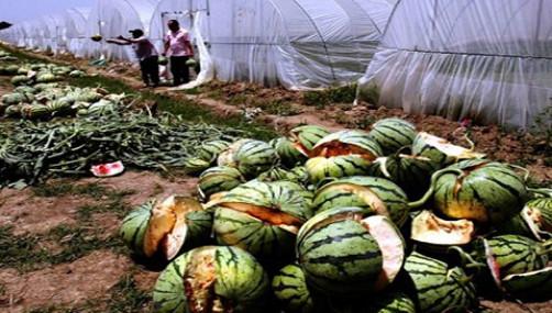Toca Comer. Pena de muerte en China, por seguridad alimentaria. Marisol Collazos Soto