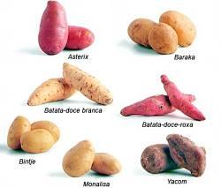 Toca Comer. El cambio climático puede dar lugar a grandes batatas. Marisol Collazos Soto, Rafael Barzanallana