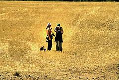 Toca Comer. El CSIC pide cultivar trigo transgénico para celíacos. Marisol Collazos Soto, Rafael Barzanallana