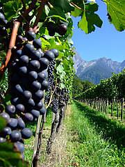 Toca Comer. Partida de uvas españolas es retirada del mercado por Holanda. Marisol Collazos Soto, Rafael Barzanallana